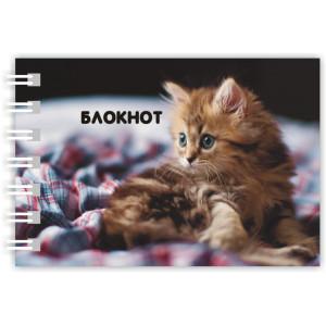 """Блокнот """"Котенок"""" /МИКС/"""